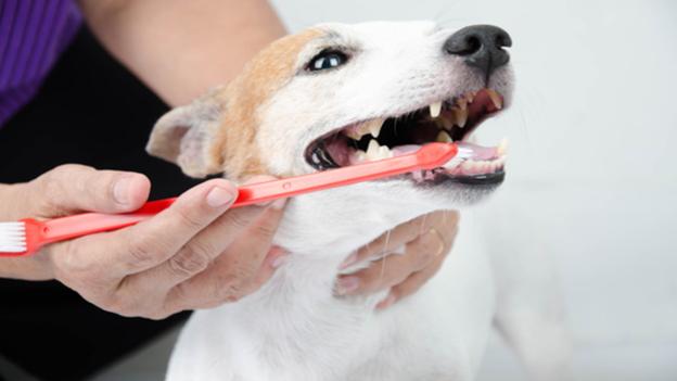 pet dental hygiene tips from eastgate pet clinic in boise id